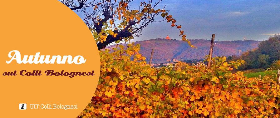 Banner autunno 2020.jpg