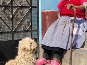 Meet Cusqueño the Pup
