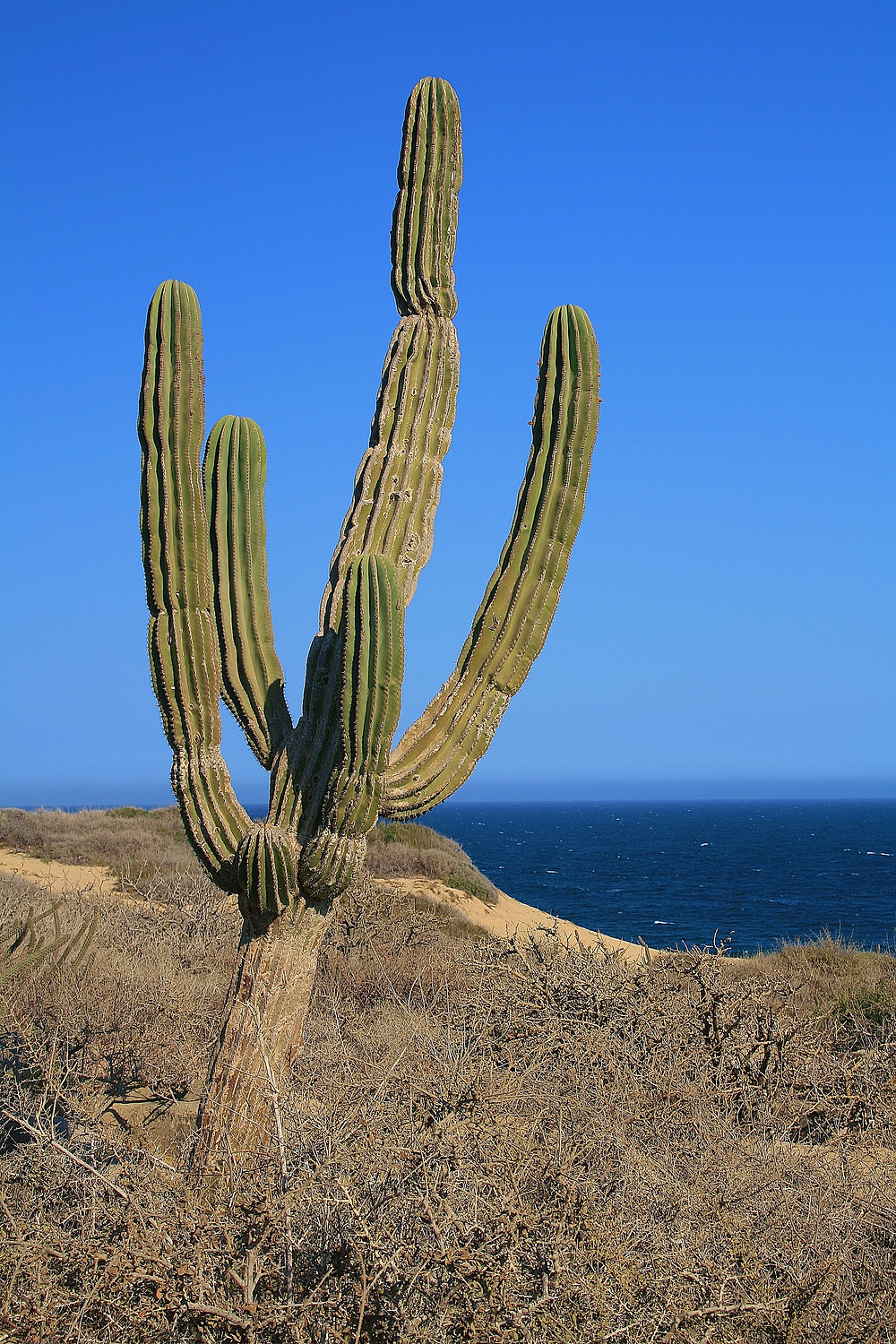 Typically Mexico; drought and cactus