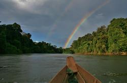 Colourful Coppename river, suriname