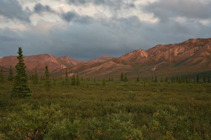 """Into the Wild"" Denali National Park, Alaska"