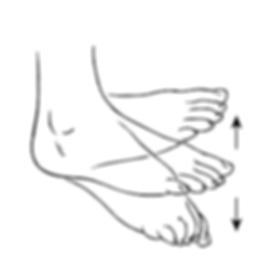 Active Dorsi_Plantar Flexion.png