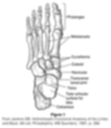 Tarsal Fracture.png