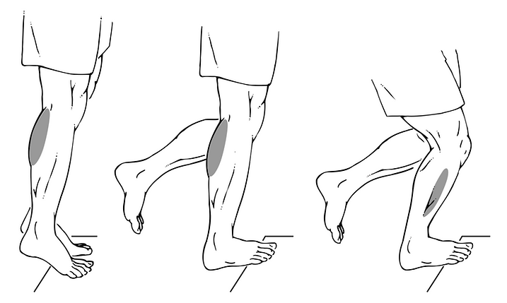 PLANTAR FLEXION STRENGTH.png