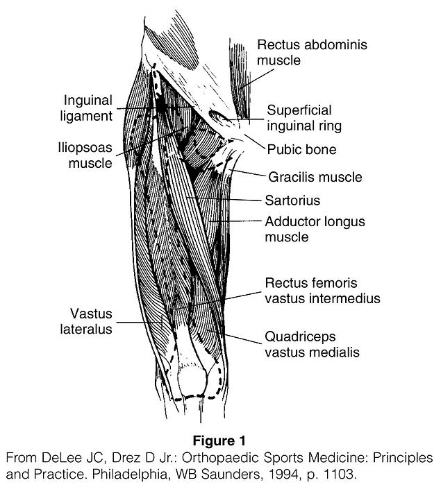 Quadriceps Contusion.png