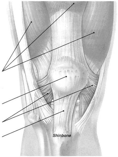 Knee Cap Pain.png