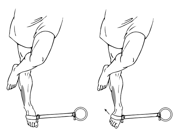 Ankle Eversion2.png