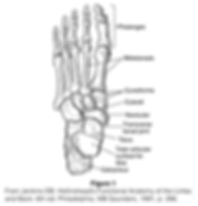 Toe Fracture.png