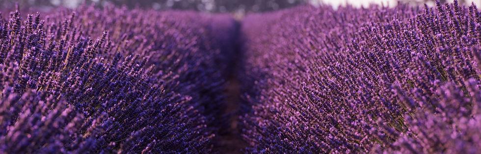 Slideshow Photo Lavender Field.jpg