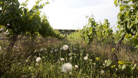 Weinanbau in bio-diversen Regionen