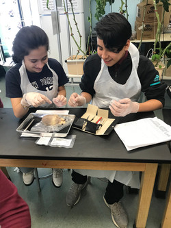 Heart Dissections
