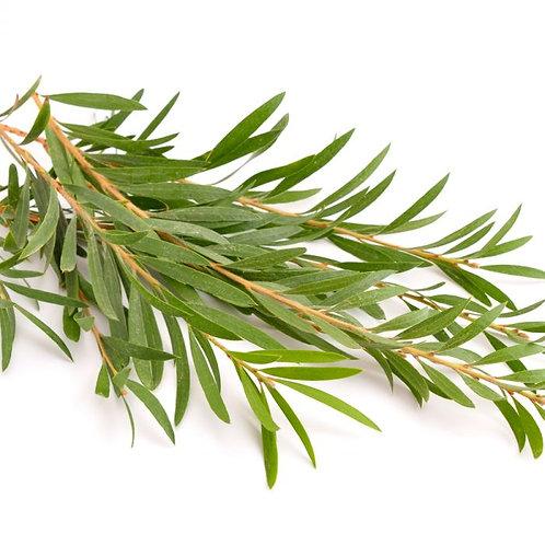 Tea Tree Dead Sea Salt Scrub
