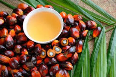palm oil.jpeg