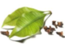 clove leaf.jpeg