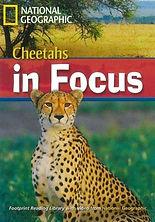 Cheetahs in focus.jpg