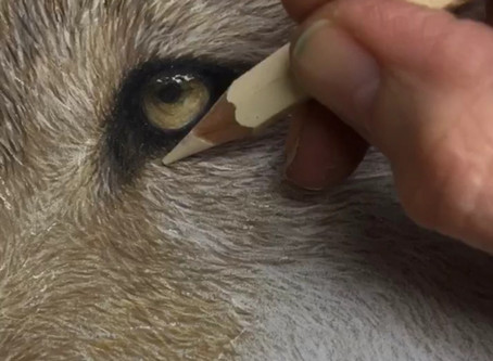In the Studio: Drawing a Wolfs Eye