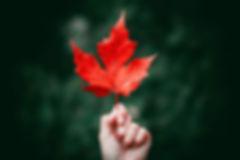 leaf-hand-holding-red.jpg