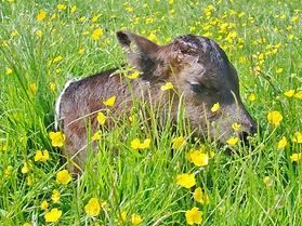 Kara calf 3.jpg