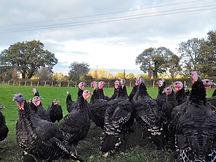 turkeys eve.jpg