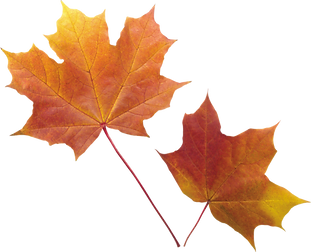 Autumn leaves image.Png