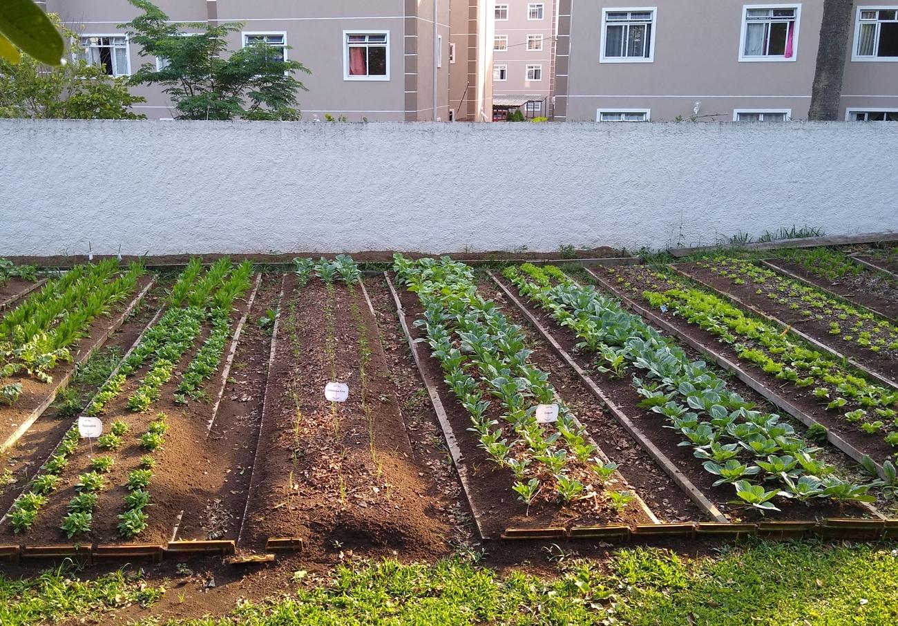 Horta orgânica comunitária no Hospital São Vicente CIC - Jornale