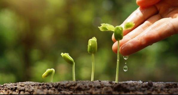 Como fazer adubo orgânico líquido para horta