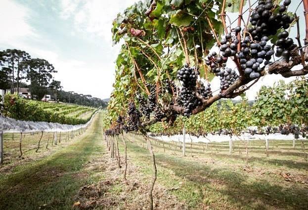 AHK Paraná promove visita guiada com degustação de vinhos premiados