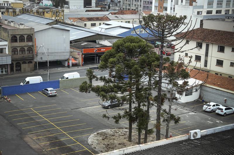 Prefeitura suspende na Justiça corte de araucárias no Centro