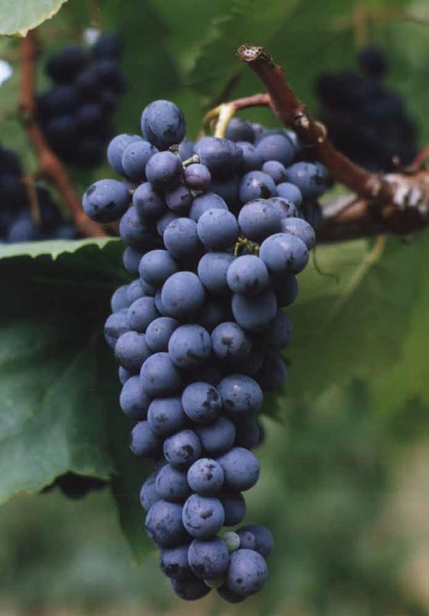 Consórcio de vinícolas da Itália demonstra confiança no mercado brasileiro