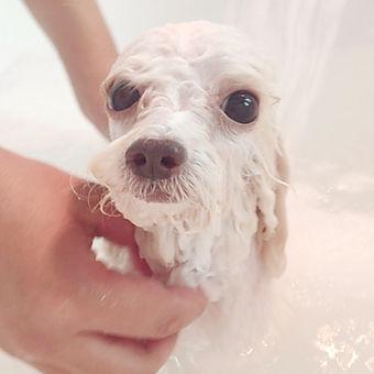 Nano Bath
