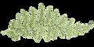 fern-leaf-logo.png