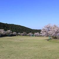 shibafu.jpg