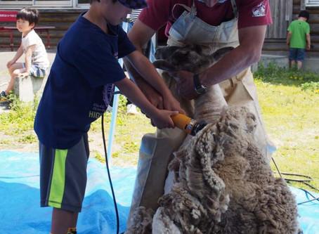 GW2018★5/3羊の毛刈り