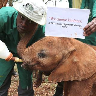 Kenya Elephant Orphanage (11).jpg