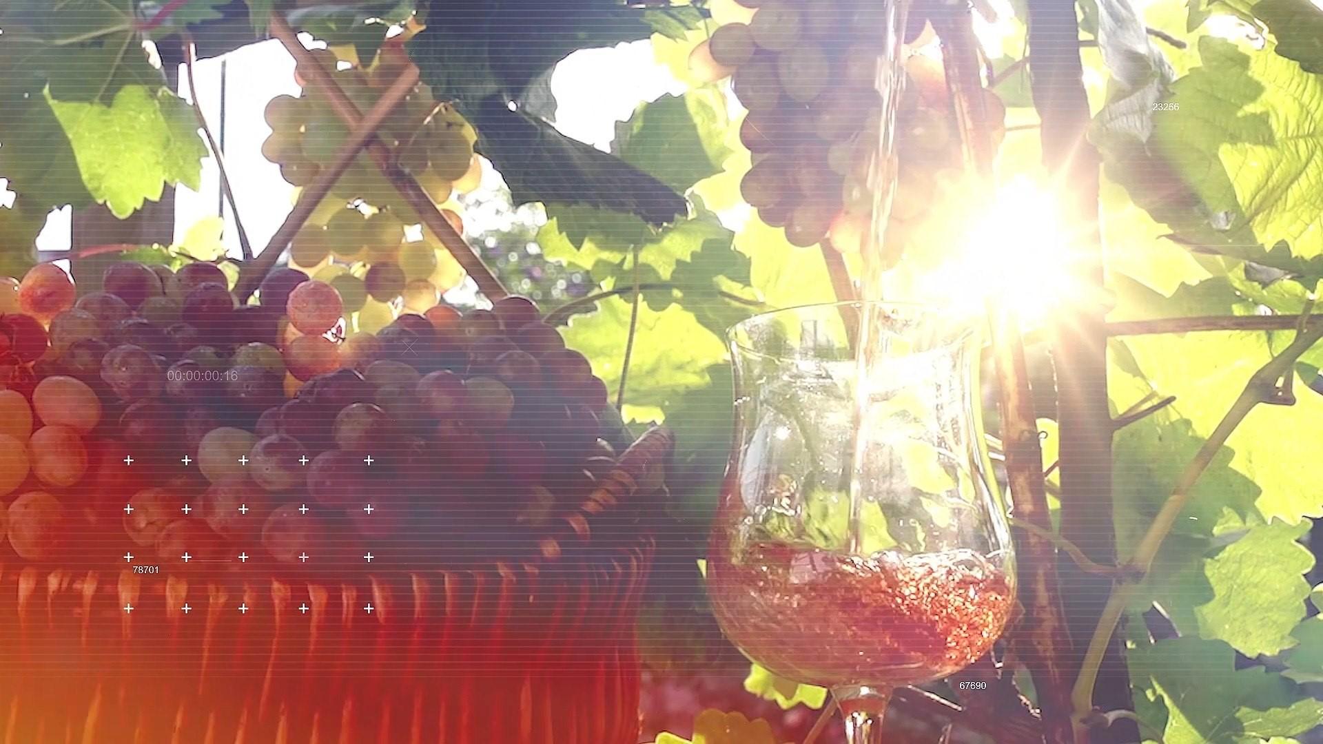 Vinhos Frank