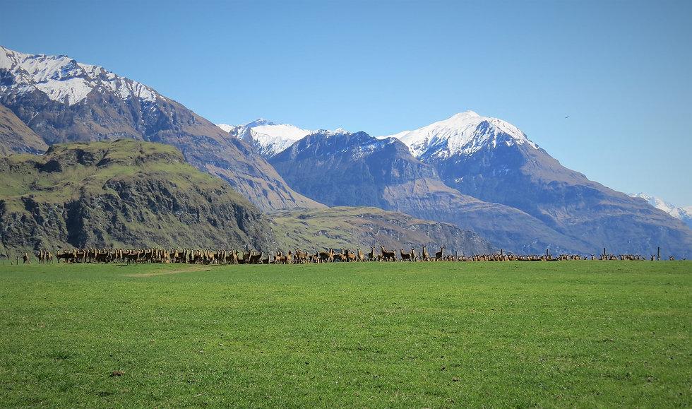 New Zealand Farmland.jpg