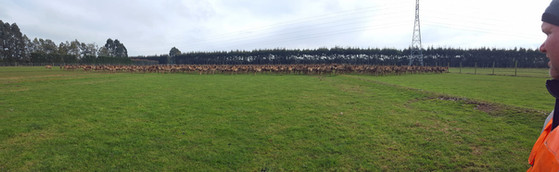 Adam observes 1,000 yearling deer at the end of winter at Northbank Station