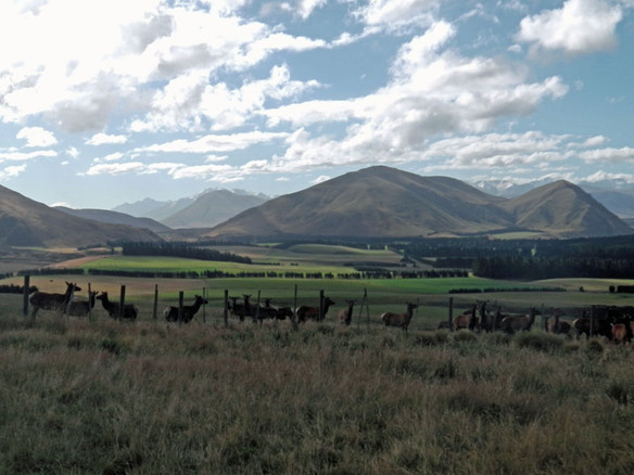 Whyte Farm