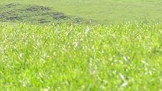 Farm - New Zealand Grassland - 2.jpg