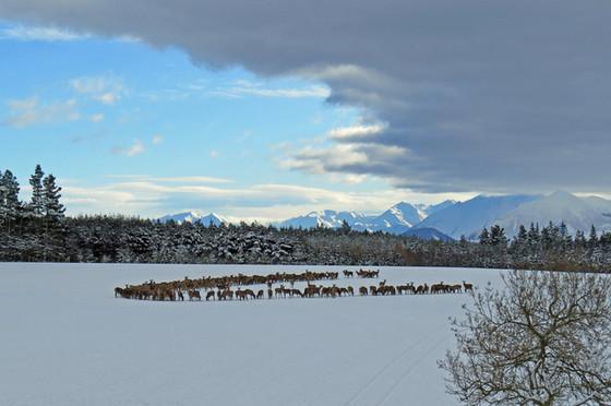 Mount Hutt Winter Feeding