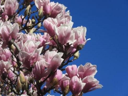 blossoms_1.jpeg