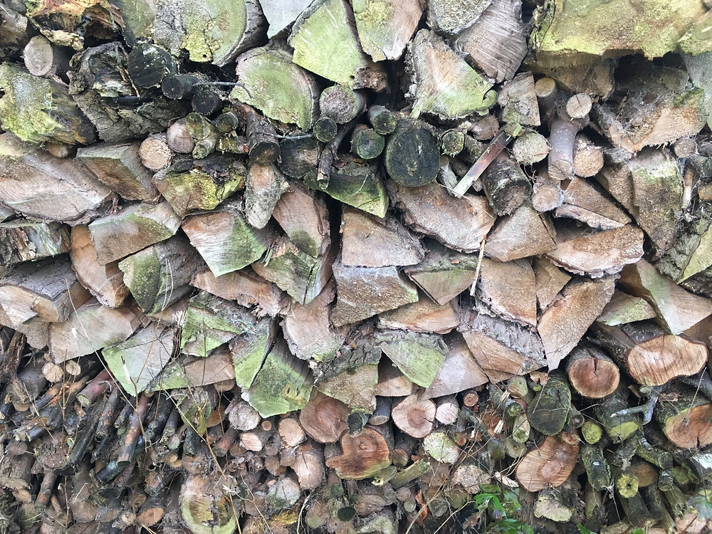 Picture of logs stacked against a wall Sheela Hobden www.bluegreencoaching.com