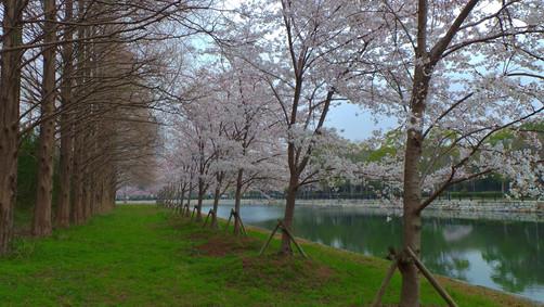 Walkway to Osaka Castle, Osaka, Japan
