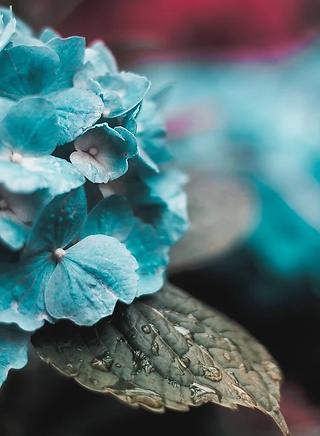 Flowers teal.webp