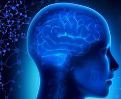 GHRD & brain aging