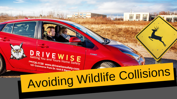 New Driver Safety Tips: Avoiding Wildlife Collisions