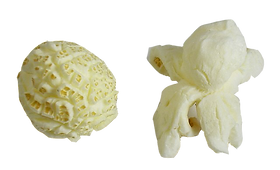 Mushroom_and_butterfly_popcorn.png