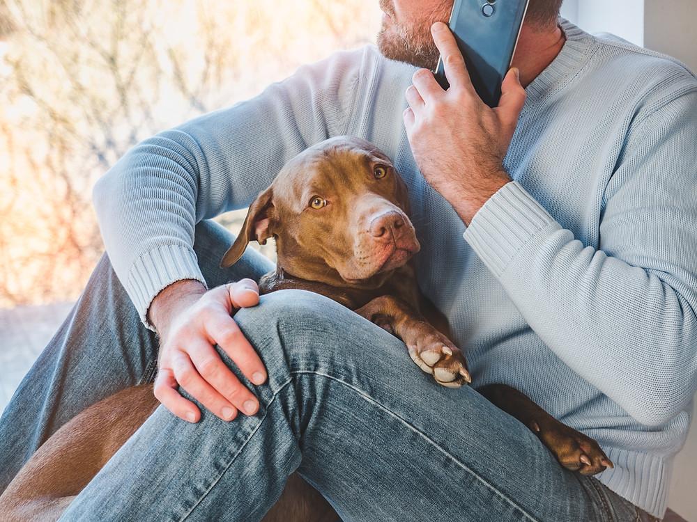 Man on the phone holding brown dog - Shop Pet CBD at WildLifeRx