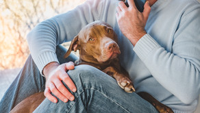 The Five Most Common CBD Questions Asked To Veterinarians