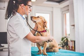 Veterinarian - WildLifeRx Shop Pet CBD